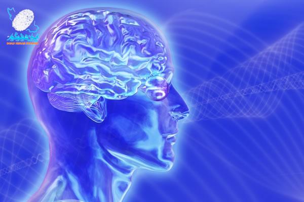 مغز همچون هولوگرام